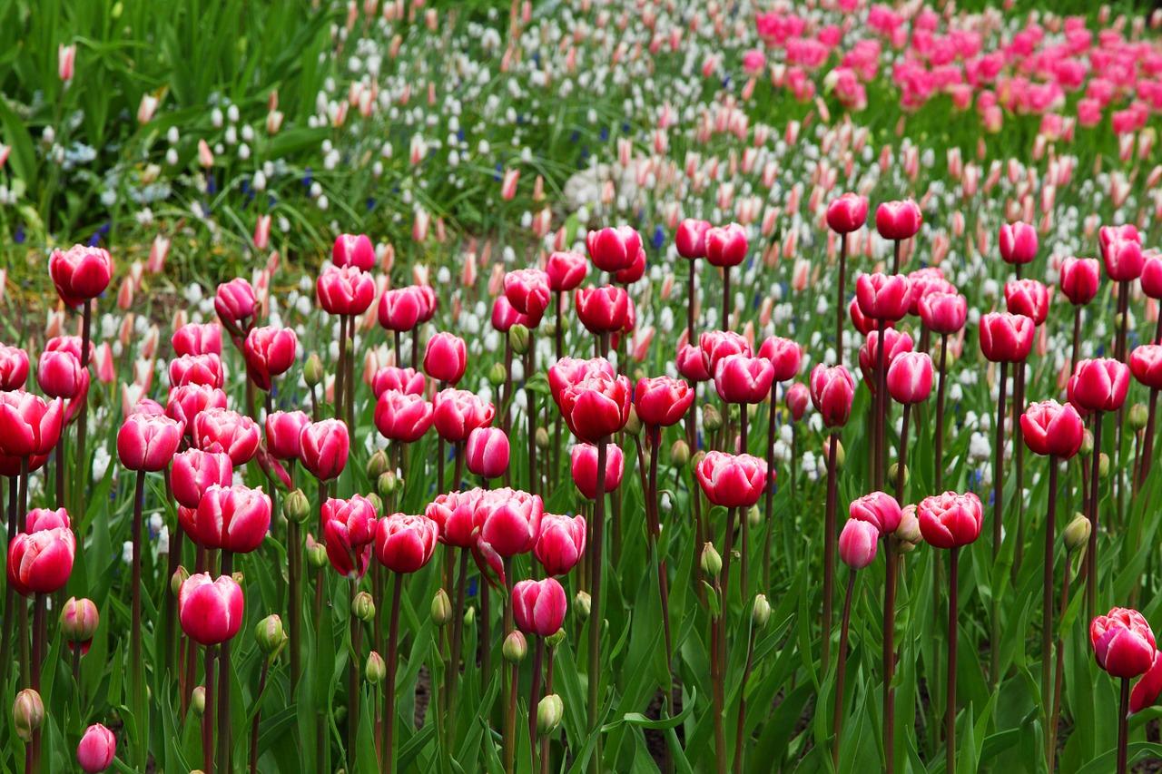 Zadbaj o swój ogród