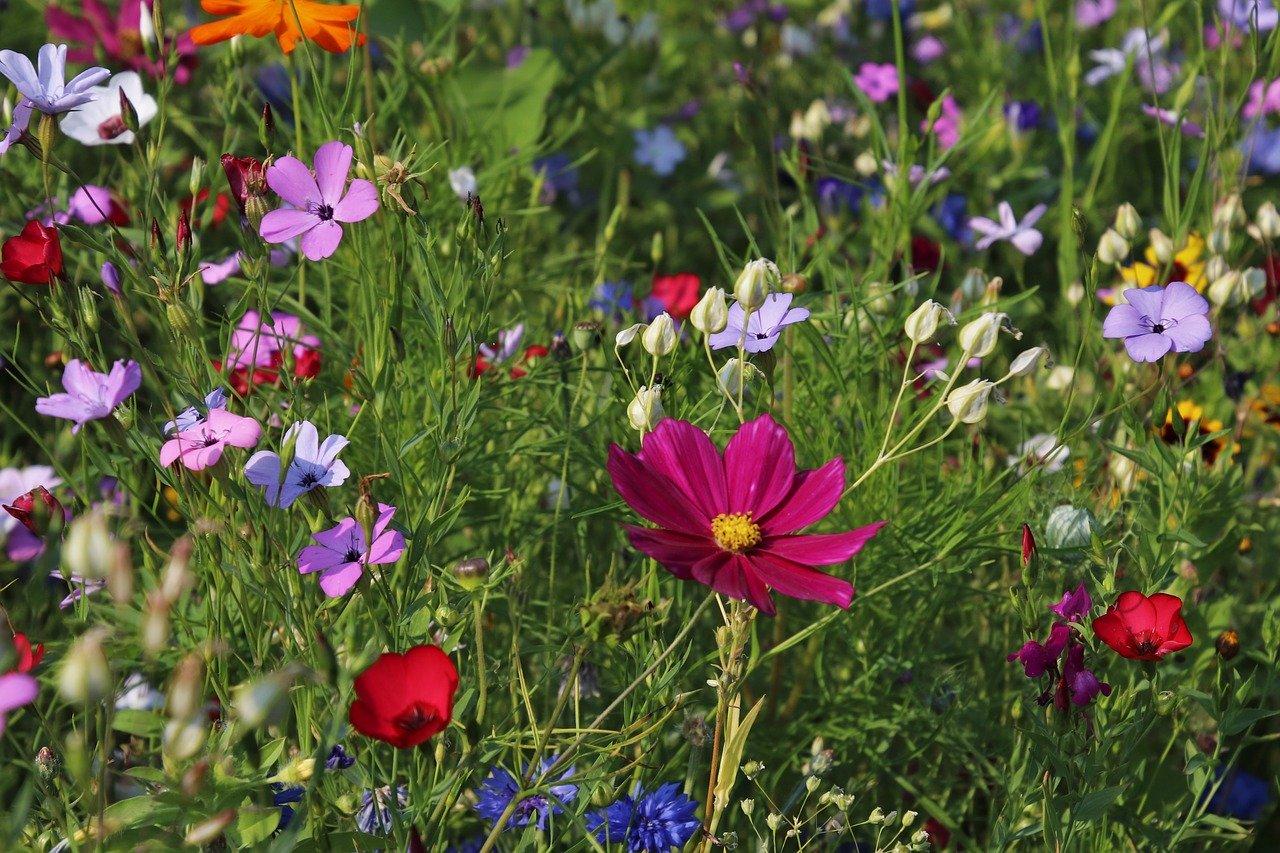 Wybierz sprzęt ogrodniczy