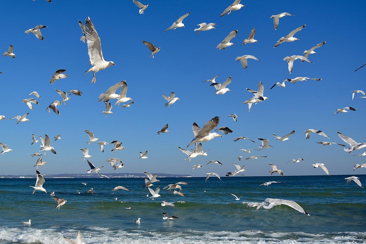Jak znaleźć noclegi nad morzem?