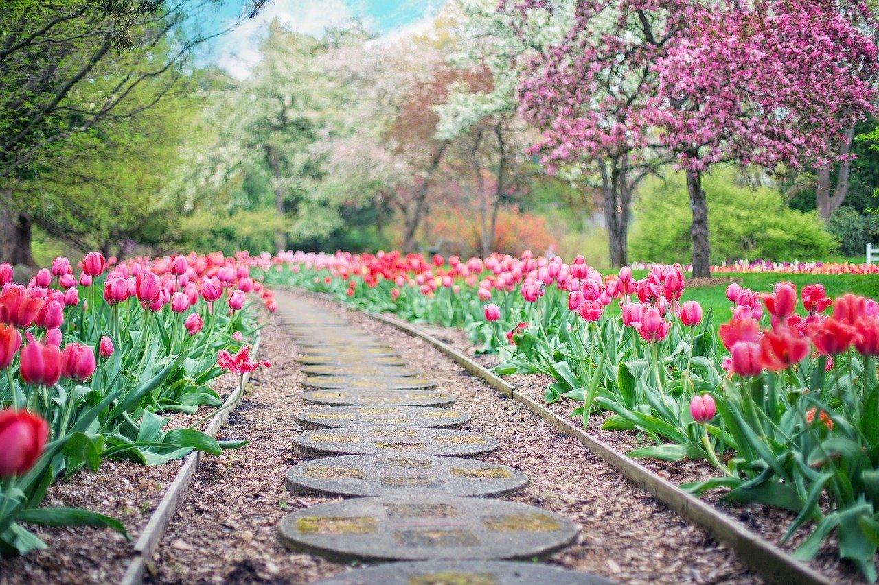Poradnik ogrodnictwa - co jest przydatne?